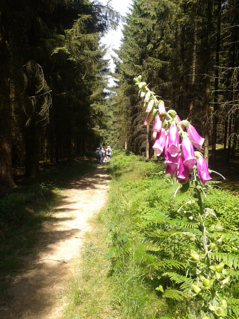 chemin de randonnée - Copie