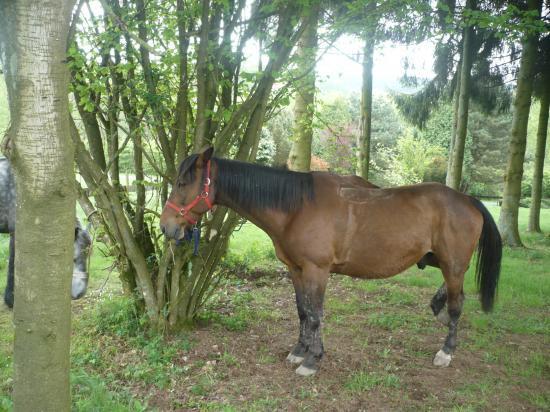 repos des chevaux à l'abris du soleil